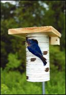 Steve Gilbertson bluebird house