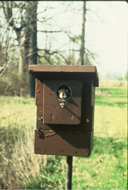 Keep nest boxes away from woods