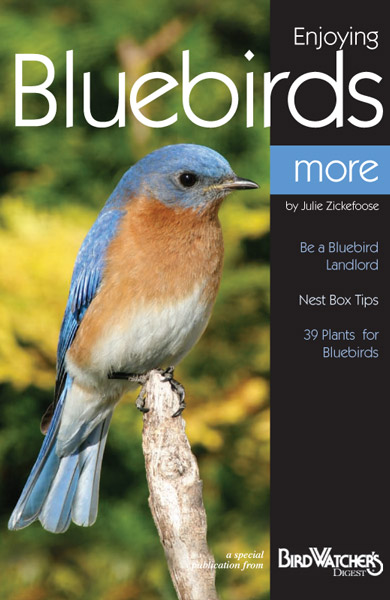 enjoying-bluebirds-more lrg