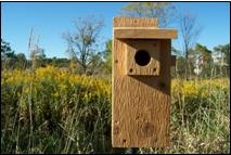 "Eastern bluebirds require a 1 1/2"" entrance hole"