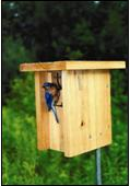 Gilwood bluebird house